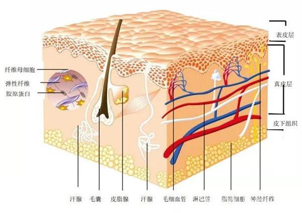 锐之优:湿疣为什么总是复发? 第1张